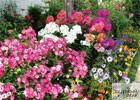 13 декабря - очередное занятие  Нижегородского областного любительского объединения  садоводов и огородников