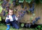 Пришла пора узнать, как проводить летнюю обрезку винограда