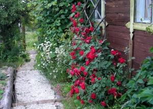 цветок спящая красавица фото