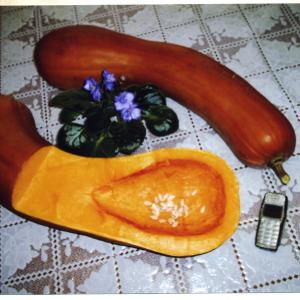 тыква - медовая гитара рецепты