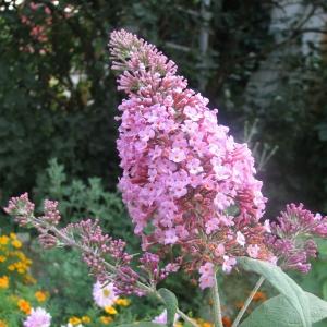 В конце лета в садах все чаще можно