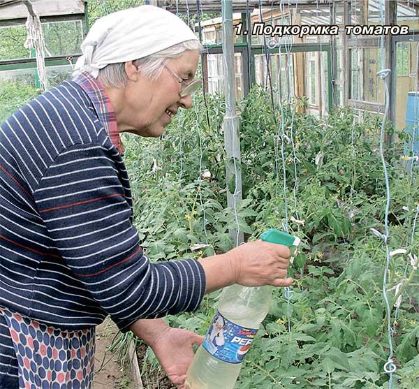 Как сделать настой чеснока для опрыскивания смородины