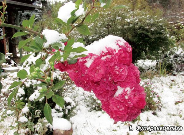 Сколько листочков должно быть у розы